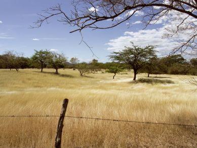 Goldenes Gras