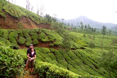 Munnar Teeplantagen