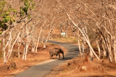 Mudumalai Nationalpark