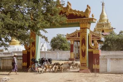 Myanmar_1260_web