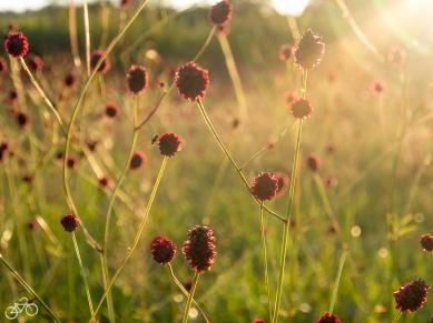 Blumen überall/ Kvetoucí květiny všude kolem