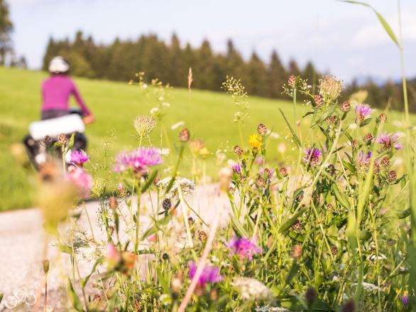 Blumen überall / Kvetoucí květiny všude kolem