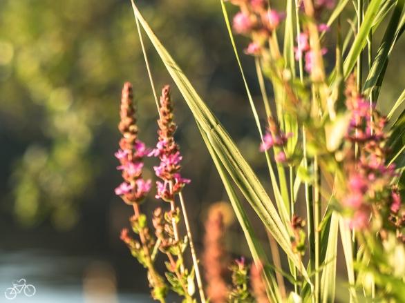 Blühende Blumen überall / Kvetoucí květiny všude kolem