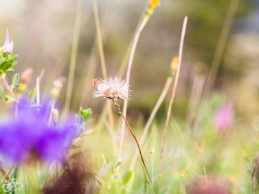 Blühende Blumen überall/ Kvetoucí květiny všude kolem