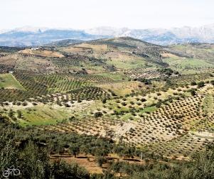Hügelland um Periana / Vrchovina kolem Periany