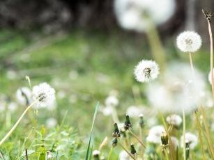 Frühjahr ist hier!